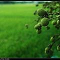 nEO_IMG_IMGP4053L.jpg