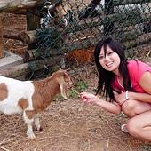 餵羊again@關西六福莊