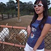 我餵羊@關西六福莊