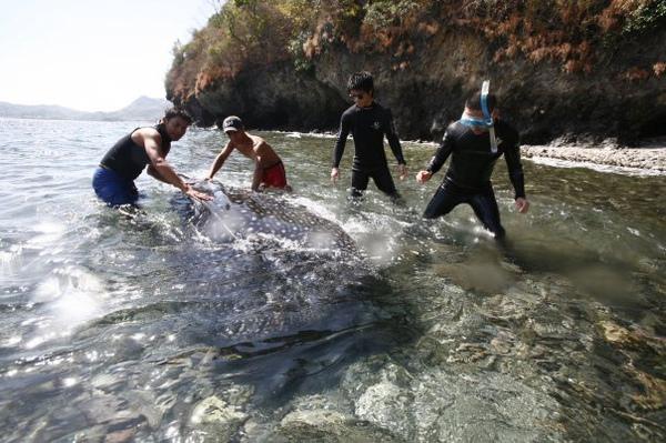 豆腐鯊5.jpg