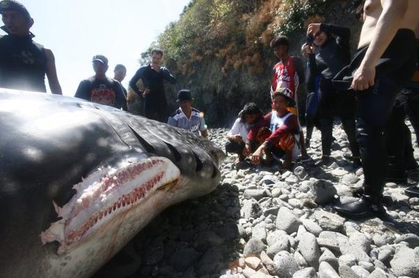 豆腐鯊7.jpg