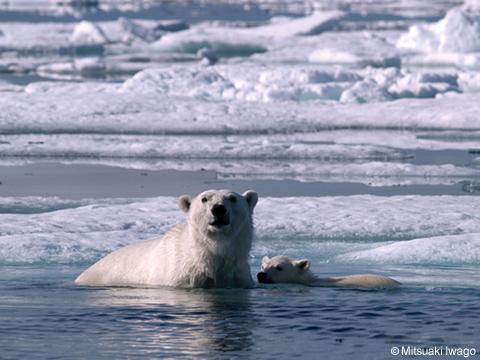 北極熊1.jpg