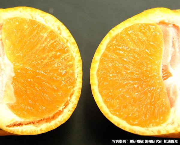 水果變化.jpg
