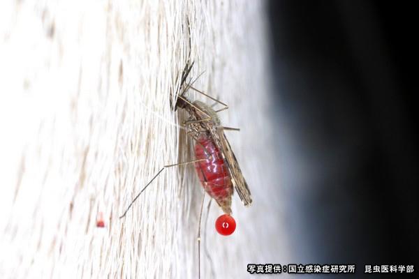 蚊蟲.jpg
