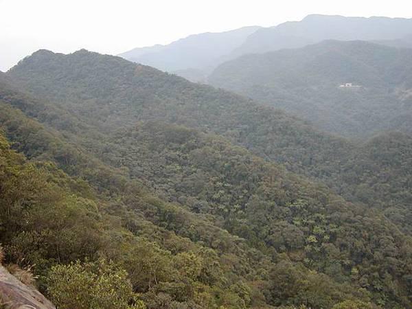 山坡上一大片的樹林,給人很舒服的感覺