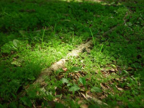 大安森林公園01.jpg