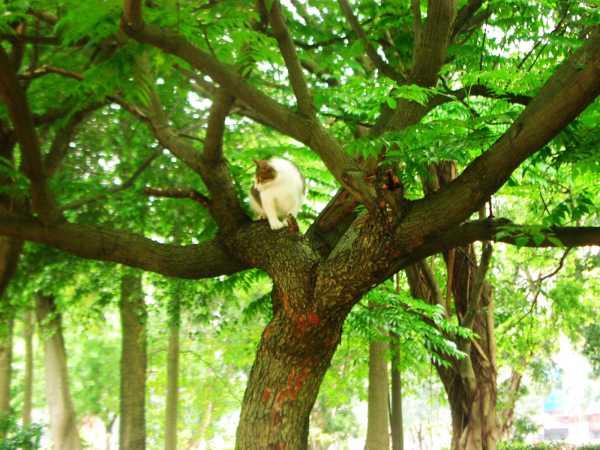 大安森林公園上樹貓02.jpg