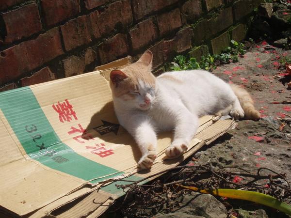 葵花油CAT