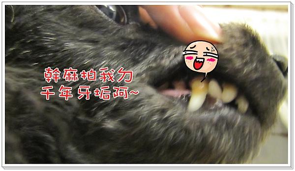 牙垢清潔前