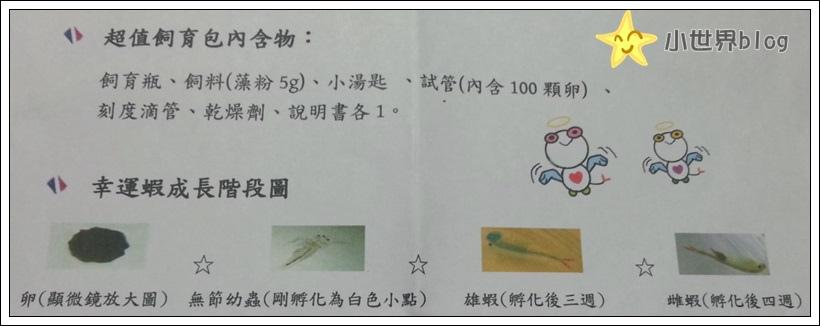 幸運蝦成長過程圖示