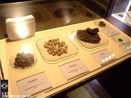 十三行博物館與聖地西藏-15