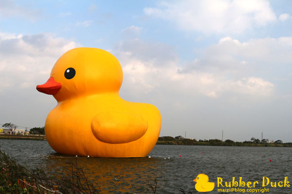 Rubber Duck -4.jpg