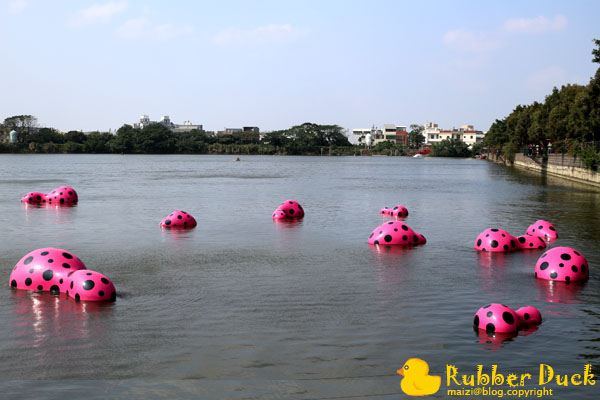 Rubber Duck -20.jpg