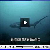 擷取刀口下的掠食者-鯊魚.PNG