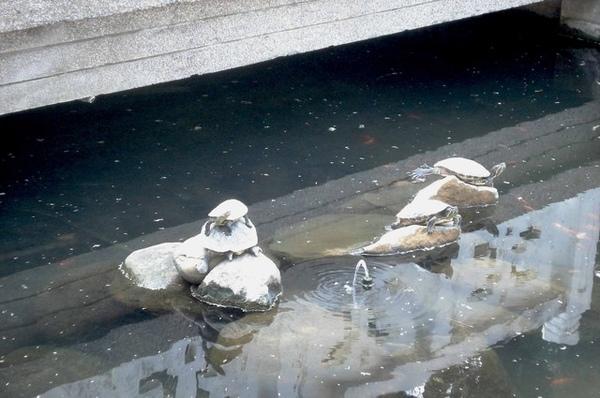 我只能說淡江中學的烏龜也太多了