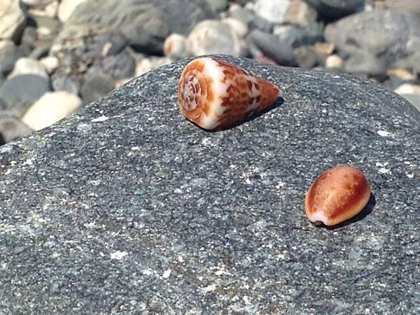 貝殼.JPG