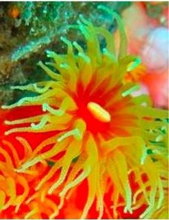 珊瑚蟲.png