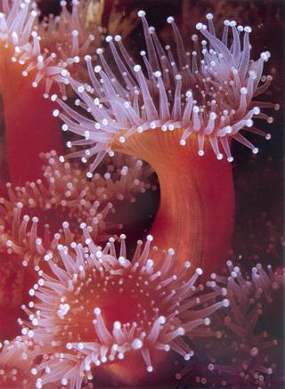 珊瑚蟲1.jpg