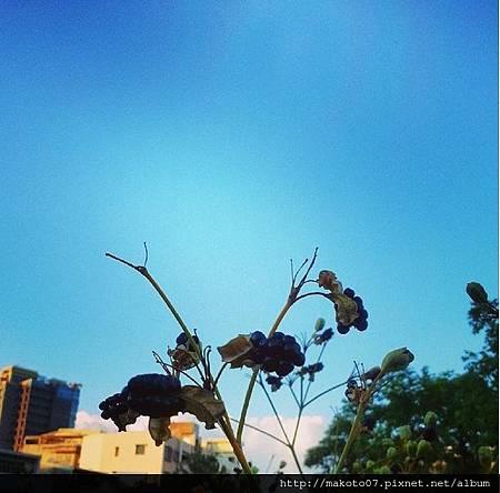 2014_07_29