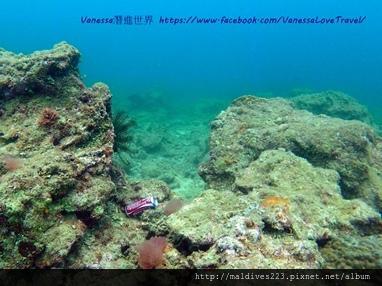 珊瑚已經漸漸被垃圾取代