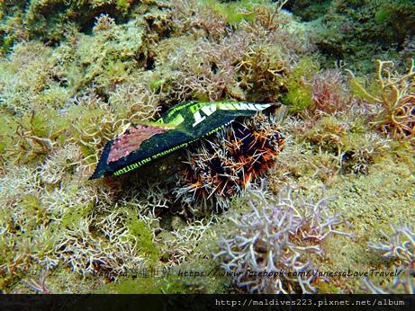 海膽不需要塑膠包裝來裝飾