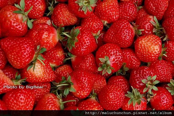 採草莓0004.jpg