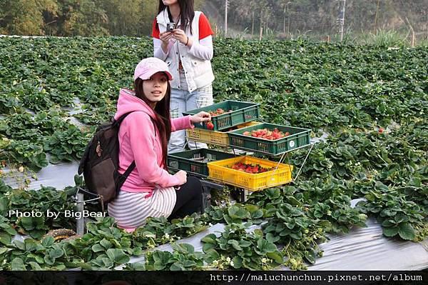 採草莓0006.jpg