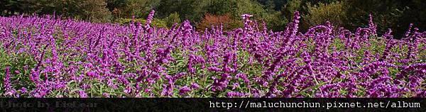 20061028武陵0263-2.jpg