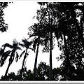 25480860:[LX3] 台大實驗林管理處