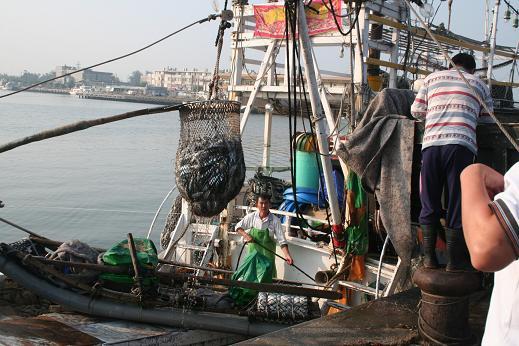 鮮魚上岸1.JPG