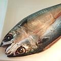 鯖魚s.jpg