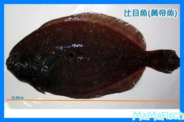 比目魚(黃帝魚).jpg
