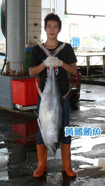 98.5.18 黃鰭鮪魚.JPG