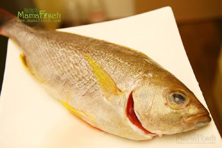 黃雞仔魚.jpg