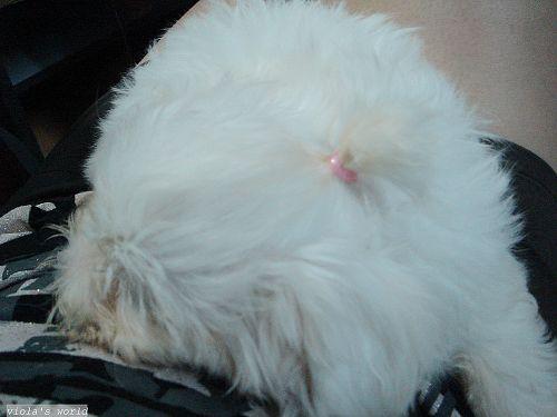 寶貝綁頭毛