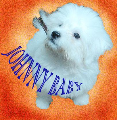 強尼出門前1