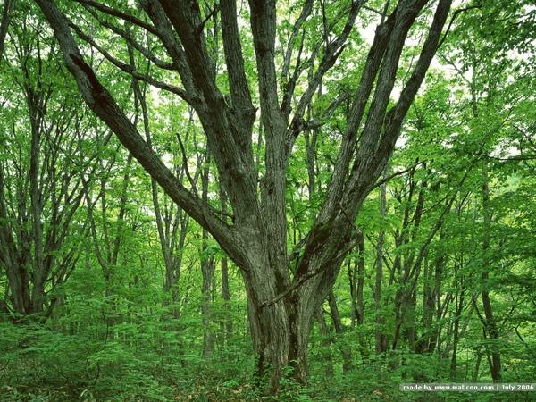 [wallcoo_com]_TREES_0EA49127.JPG