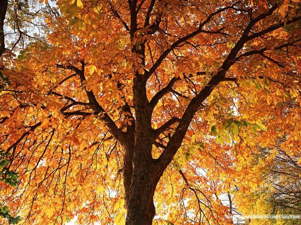 [wallcoo_com]_TREES_0EA49148.JPG
