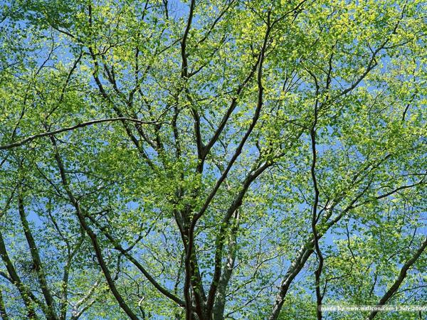 [wallcoo_com]_TREES_EA49120.JPG