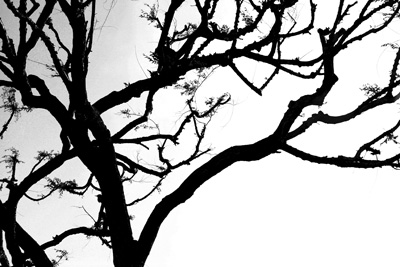 Tree-silhouette72.jpg