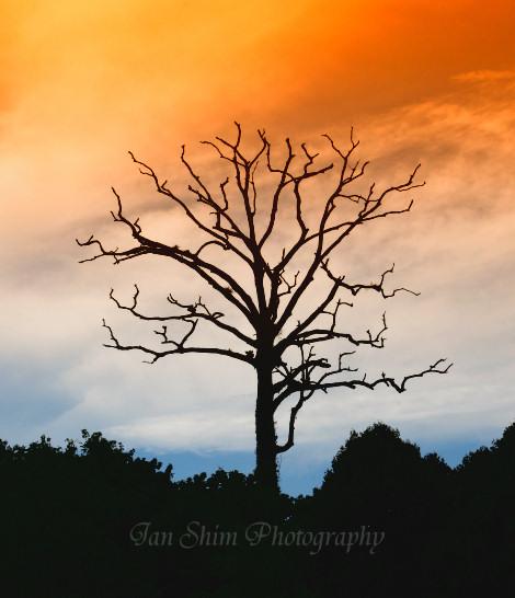tree-silhouette.jpg