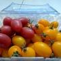 紅蝌蚪番茄2