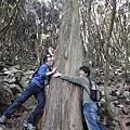 三人和抱的大樹