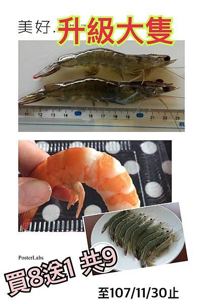 無毒蝦.jpg