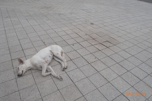 午後懶洋洋的狗