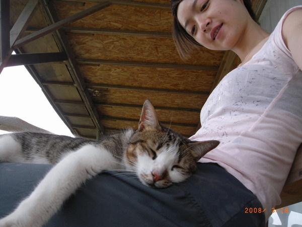 貓很親人,一直來到我身上