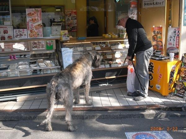 好大好大的狗