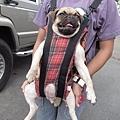 幸福的逛街狗兒