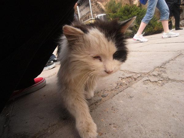 長城口的流浪貓