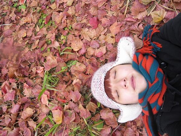 而這是美麗的落葉楓